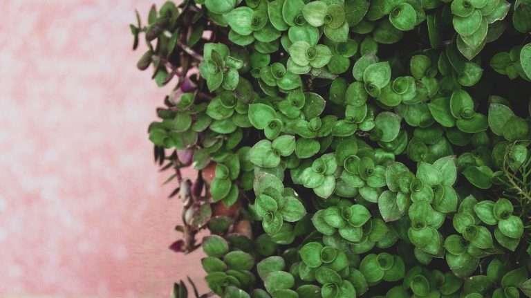 plants climbing